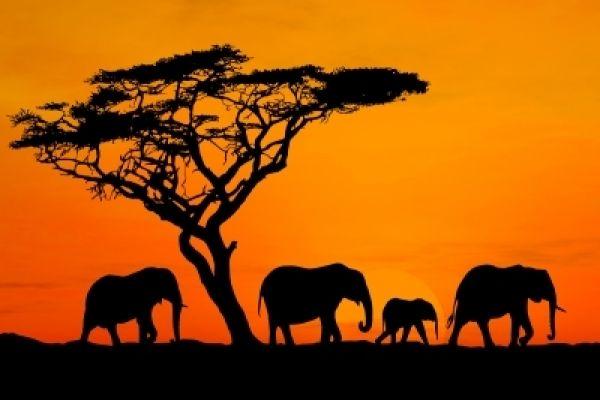 Νεαροί Εξερευνητές στην Αφρική - Πέντε μικροί εξερευνητές δέκα χρονών αφήνουν το σπίτι τους και ξεκινούν για το άγνωστο